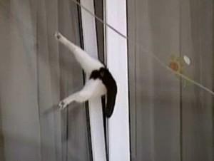 okno-cats-02