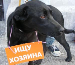 помощь бездомным животным Хотьково Сергиев-Посад Сергиево-Посадский район