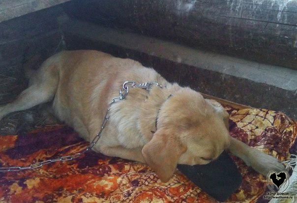 помощь бездомным животным Хотьково Сергиев-Посад и Сергиево-Посадский район