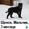Щенок Горбуновка