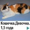 Кошечка триколор