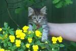 Милый котенок ищет дом!