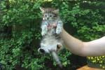 Котенок ищет уютный дом!